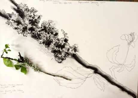 Lichen (charcoal)